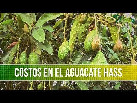 Conocer mujer Dominicana solo wapsas etiquetas